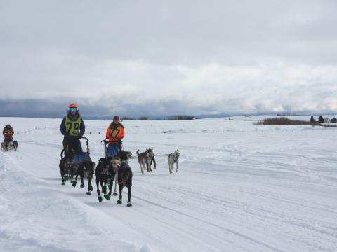 Competidores en la carrera de trineos American Derby Dog, Idaho